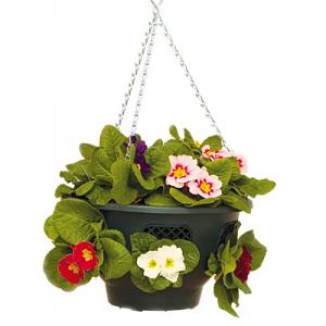 AquaBlade® hängende Pflanzenschale